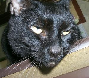 CAT_55