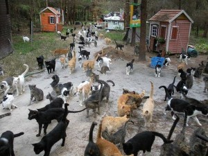 audience Man-Built-a-Sanctuary-for-Homeless-Cats-5