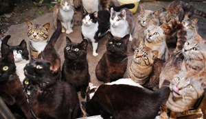 AUDIENCE many-cat-cats-island