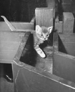 ROUTE Cat in a maze
