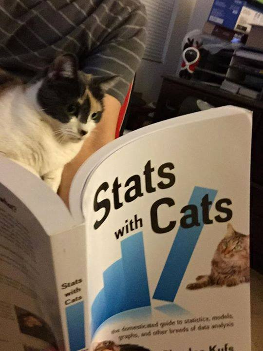Reading Stats with  Cats