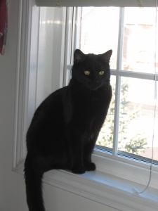Black_cat_on_window