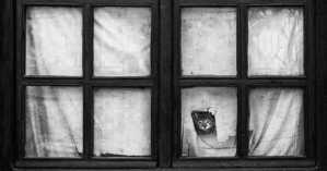 cat-window-1