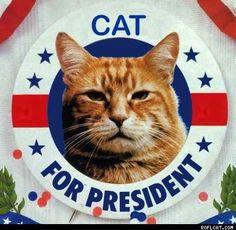 Cat for president