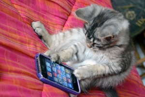 cat-using-iphone
