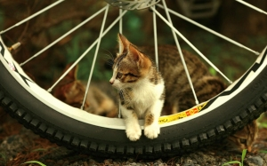 cat-bicycle