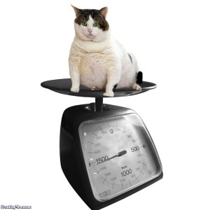 scale-fat-cat-on-a-scale-30630