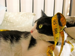 tape-measure-on-a-cat
