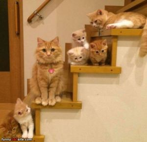 the_cat_stairs