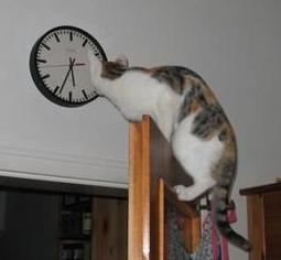 time-daylight-savings-time-cat-checks-for-accuracy