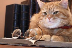 cat-diary