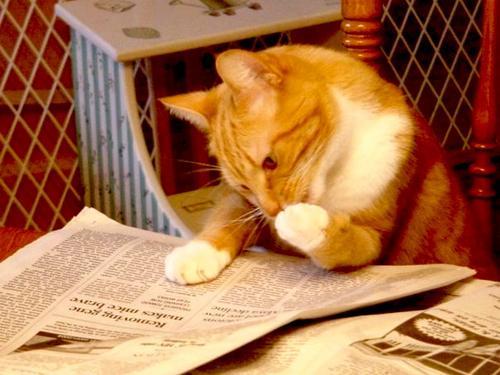cat-news3