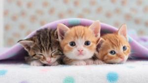 5518606-pics-of-kittens