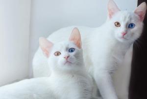 12-sistwins-cats.w710.h473