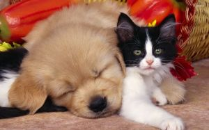 cute-dog-and-cat-hd-wallpaper