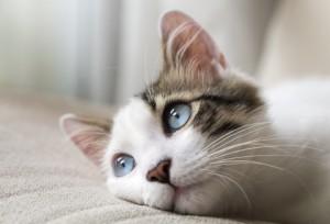 page-cat-models-cat