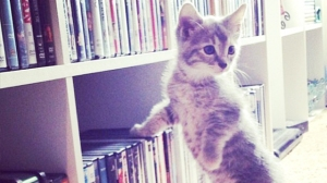 kitten-exploring-bookshelf