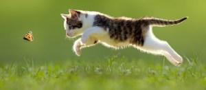 1-4 cat_m3_cat_outside_1