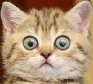 frightened kitten 6
