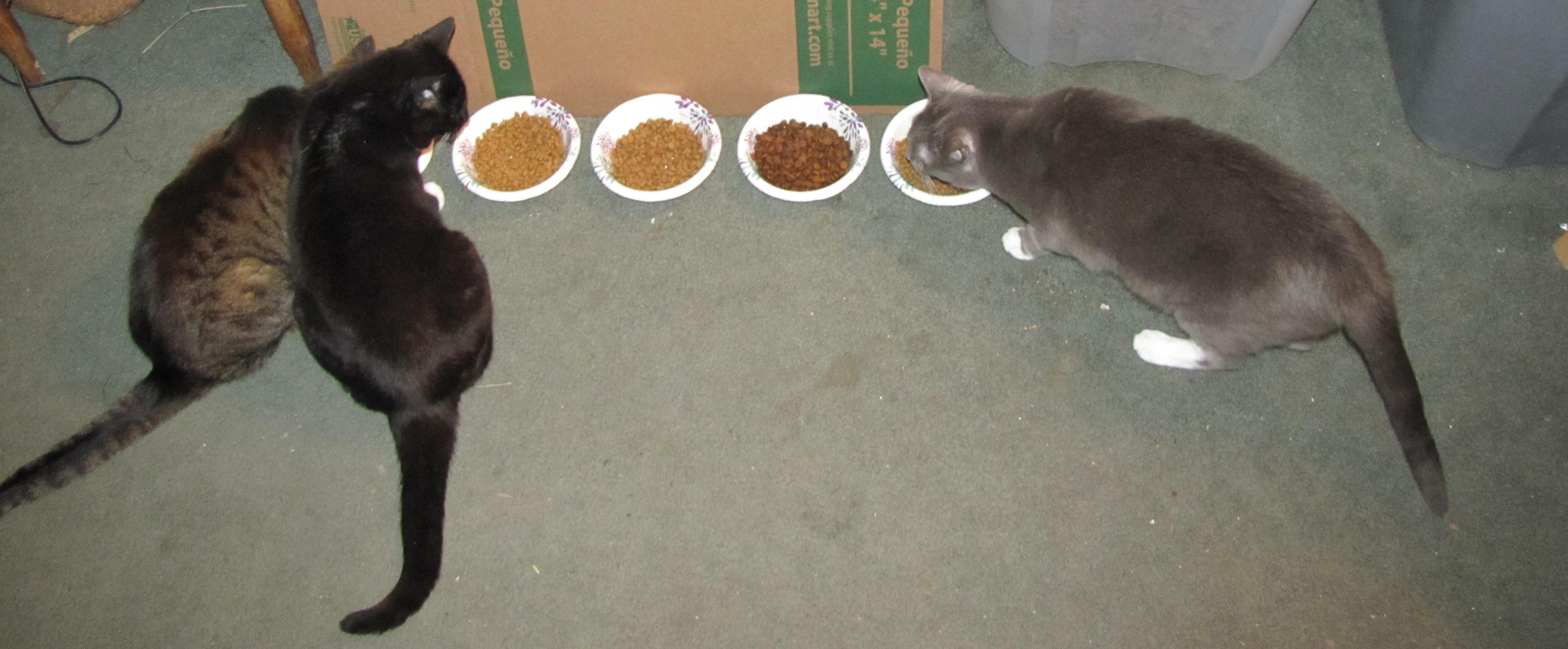 Cats Three-IMG_5863